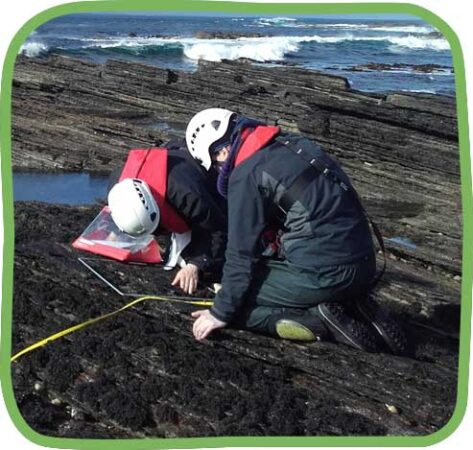 Shore-Seaweed-Sustainability